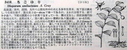 IMG_3605回転-480.jpg